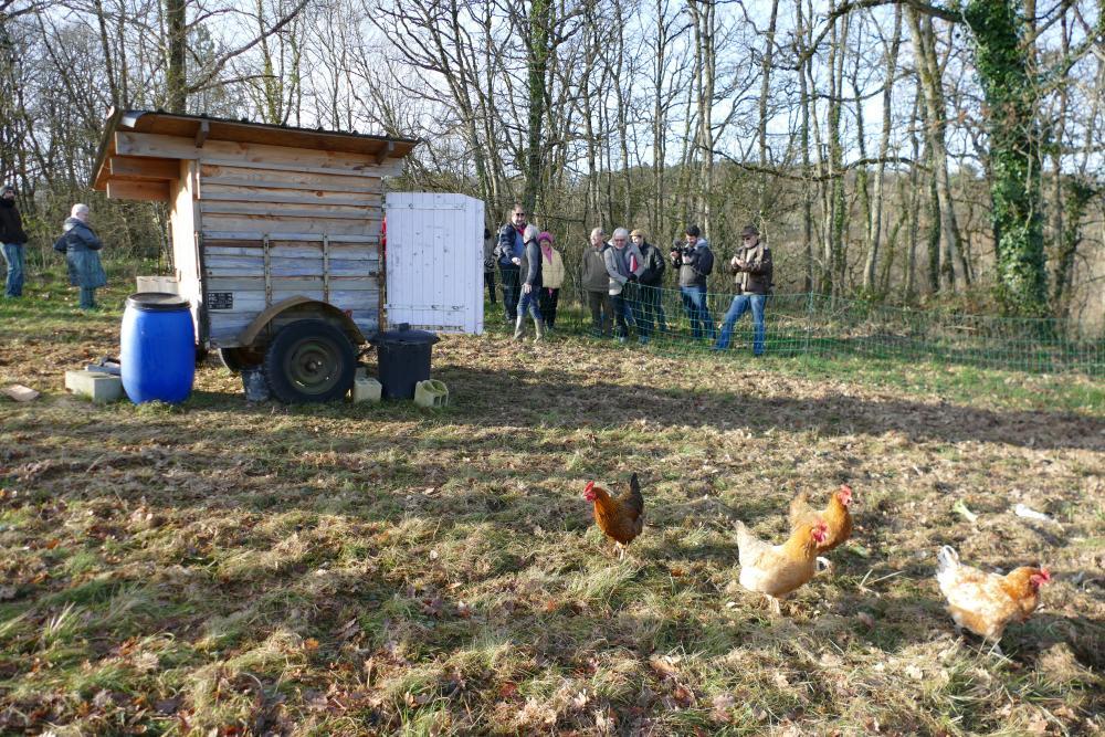 Poulailler itinérant et poules nomades