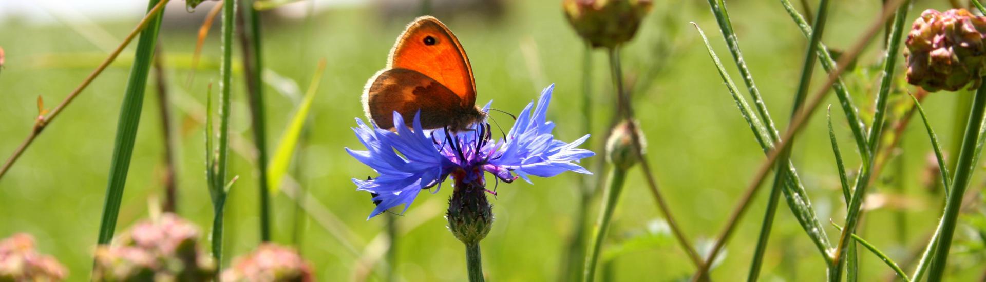 Jouqueviel papillon